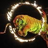 Цирки в Вербовском