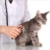 Ветеринарные клиники в Вербовском